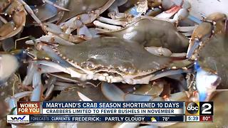 Decline in blue crab population leads to shorter crab season