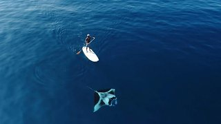 Drone Spots Huge Manta Ray Swimming Next To Paddleboarder