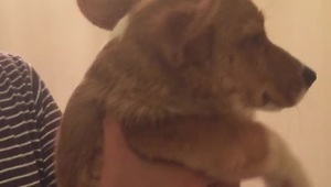 Puppy thinks she's swimming while being hair dried - Video