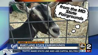 Good morning shout out from goat at the Maryland State Fairgrounds - Video