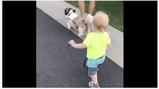Baby boy takes his doggy for a walk