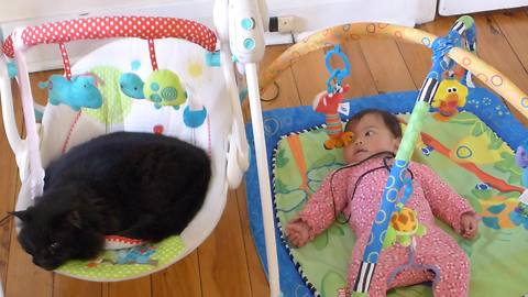 Baby watches in disbelief as cat steals her rocker