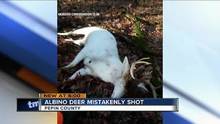 Albino deer accidentally shot - Video