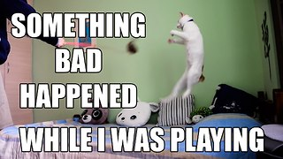 Cat too upset to play after breaking favorite toy