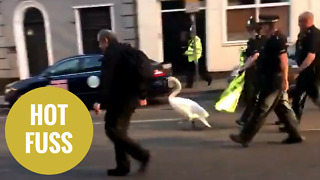 Swan that stormed into a party street is escorted away by police