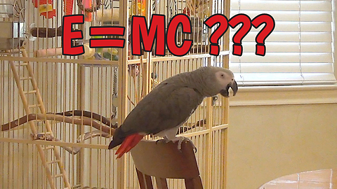 Inventive Parrot Creates His Own Version Of The Theory Of Relativity