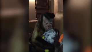 Monkey Steals Dog's Toy - Video