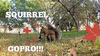 Vlogger Documents Hungry Squirrel Stealing His GoPro - Video