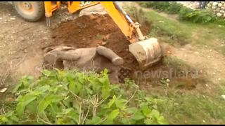 Indian forest officials rescue baby elephant stuck on its back - Video