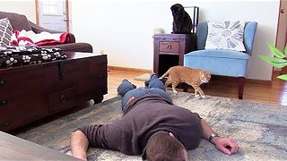 How Would My Cats React If I Faked My Own Death? - Video