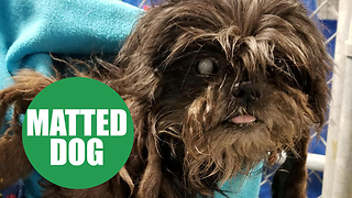 Dog with matted fur undergoes amazing transformation - Video