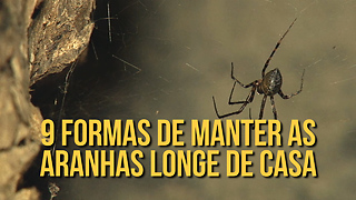 Como afastar aranhas de casa de forma natural - Video