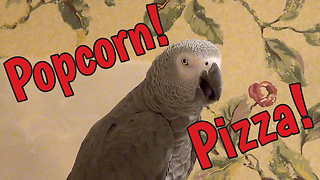 Chatty Parrot Talks About Popcorn And Pizza - Video