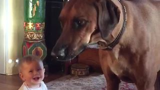 Playful Ridgeback chases bubbles, makes baby laugh