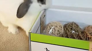 Rabbit super thrilled to receive bunny-themed gift box