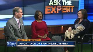 Ask the Expert: Why spay and neuter your pates? - Video