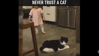 Never Trust a Cat - Video
