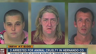 3 arrested for animal cruelty in Hernando Co. - Video