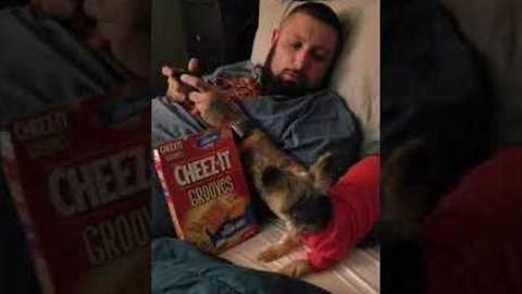 'No Cheez-Its!' – Pup Will Stop at Nothing to Get Her Favorite Treat