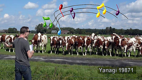 Burping Conductor 'Moo-Zart' Puts On Symphony For Delighted Cattle