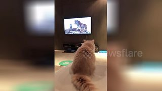 Cat scared by tiger on TV