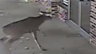 Surveillance Video Captures Deer Crashing Through Barbershop Window in Missouri - Video