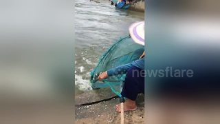 Fish are literally jumping into this elderly Thai woman's net - Video