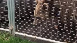 Young Girl Gets More Interested In A Worm Than A Bear