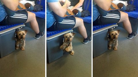 Dog desperate for attention on train dances and prays with his paws in heart-melting video
