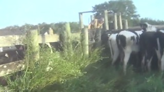 More accusations of abuse at another dairy farm - Video
