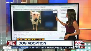 Four dogs up for adoption - Video