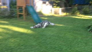Backyard Doggy Wipeout  - Video