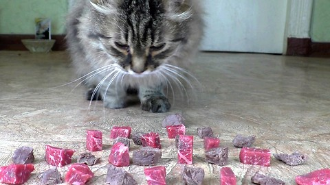Do cats prefer raw or boiled meat?
