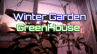 Winter Garden Jan 20th 2021