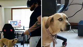 Dog looks less than impressed with owner playing virtual reality game