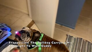 Bulldog carries flashlight in mouth for night walks