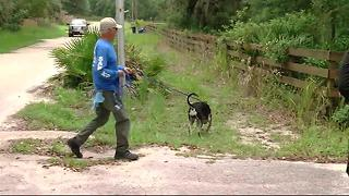 Deputies using dogs in search for missing grandmother - Video