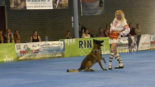 Malinois twists and jumps at Dog Dance World Championships - Video