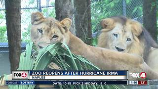 Naples Zoo reopens after Irma - Video