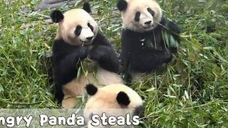 Panda Learns a Life Lesson Over Lunch - Video