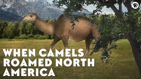 When Camels Roamed North America