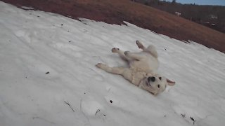 Dog repeatedly slides down icy hill - Video