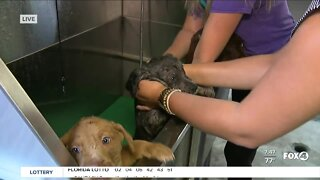 Pet of the Week: Bath time for Mixy's puppies at GCHS