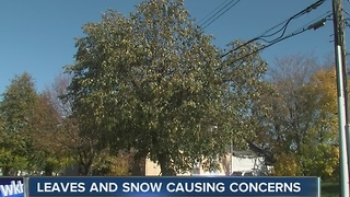 Leaves, snow and the power company concerns - Video