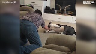 Dog loves to be dragged across the floor by owner