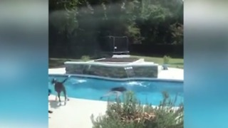 Kids Eat Cupcakes. When Dad Sees What's Inside, He Jumps in the Pool. - Video