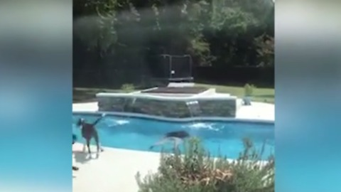 Kids Eat Cupcakes. When Dad Sees What's Inside, He Jumps in the Pool.