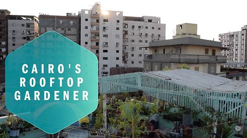 The roof gardens battling against Cairo's pollution