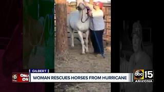 Gilbert group rescues horses from Hurricane Harvey - Video