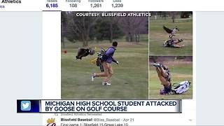 Photos of high school golfer being attacked by goose go viral - Video